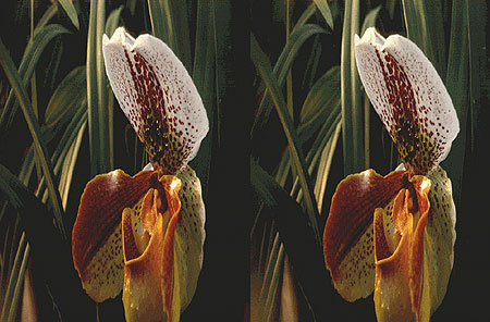 orchid-stereo-lg.jpg