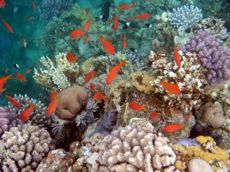 Снимок сделан при плавании с маской; камера Cassio 4000, чехол Ewa-Marine