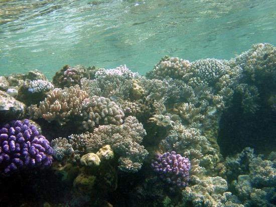 Фотографии сделаны на глубине метров двух-трех от поверхности 2