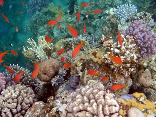 Фотографии сделаны на глубине метров двух-трех от поверхности 1