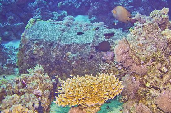 А это бочка, обросшая кораллами, с того самого корабля
