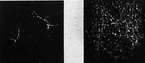 НР слева, Wellprint справа. После 30 истирающих движений