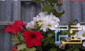 Пример съемки камерой смартфона HTC Incredible S