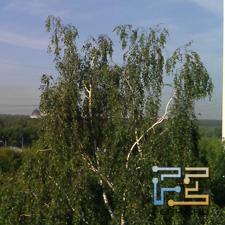Пример фотографии, снятой основной камерой планшета HTC Flyer