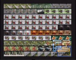 Fujifilm FinePix JX350. Матрица миниатюр 10х10