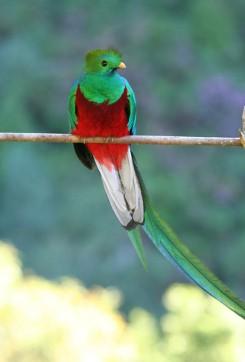 Ubuntu 12.10 выйдет под кодовым именем Quantal Quetzal