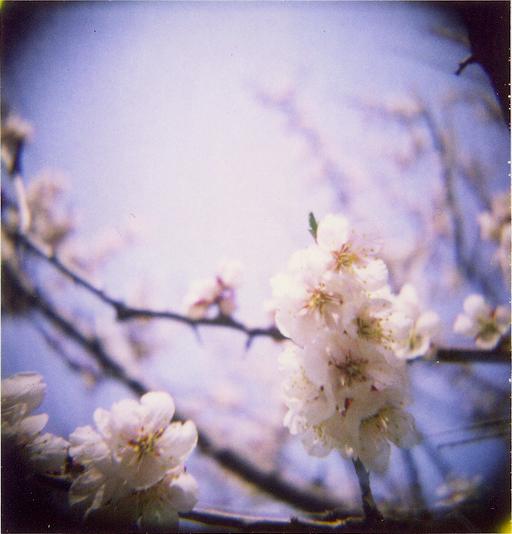Holgaroid, Polaroid 89, просроченная. Автор: miwas (Flickr)