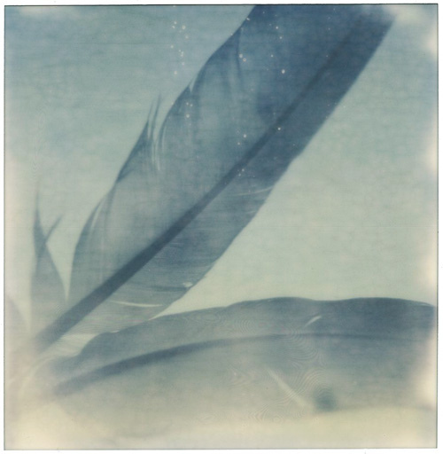Polaroid SX-70 + Impossible Project PX70