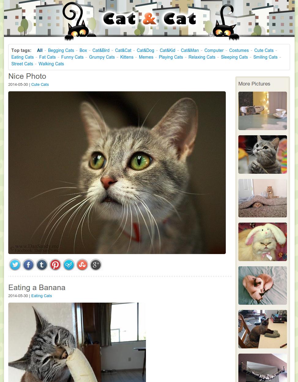 Сайт дня: Cat&Cat - котофилия и котомания