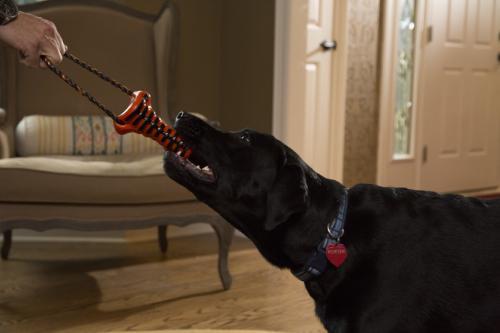 Электронная игрушка для собак избавляет их плохого запаха изо рта