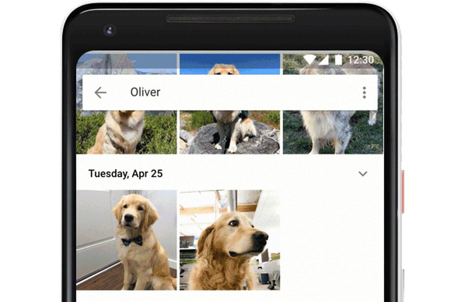 Google Photos научились распознавать собак и кошек