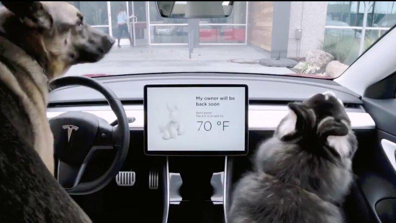 Антиугон и климат-контроль для собак пришли на автомобили Tesla