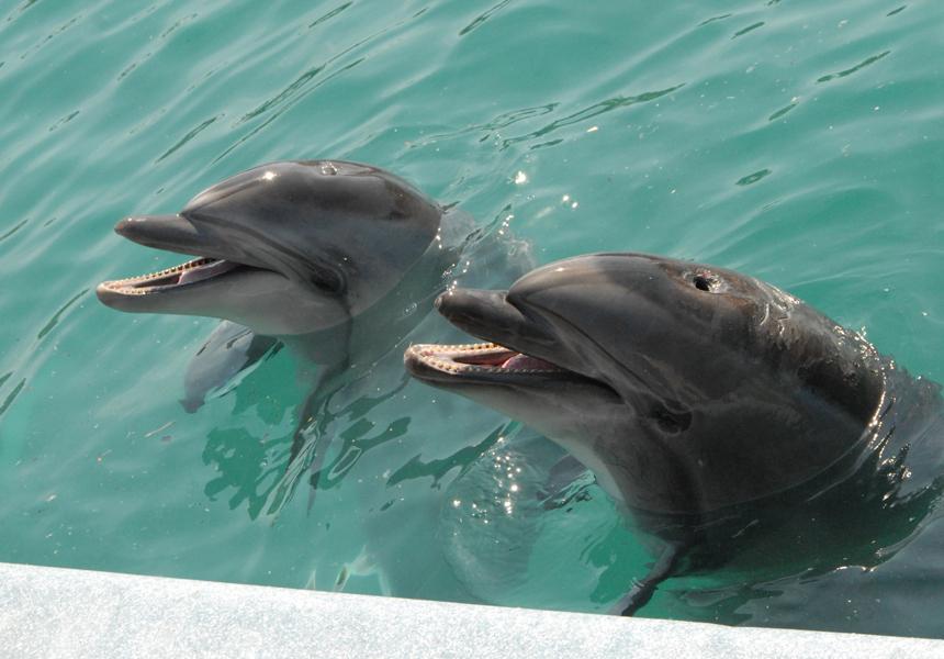 Найдено сходство между людьми и дельфинами
