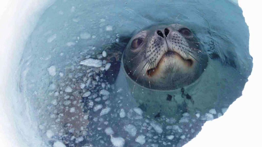 Учёные объяснили, откуда в Антарктиде взялись дырки