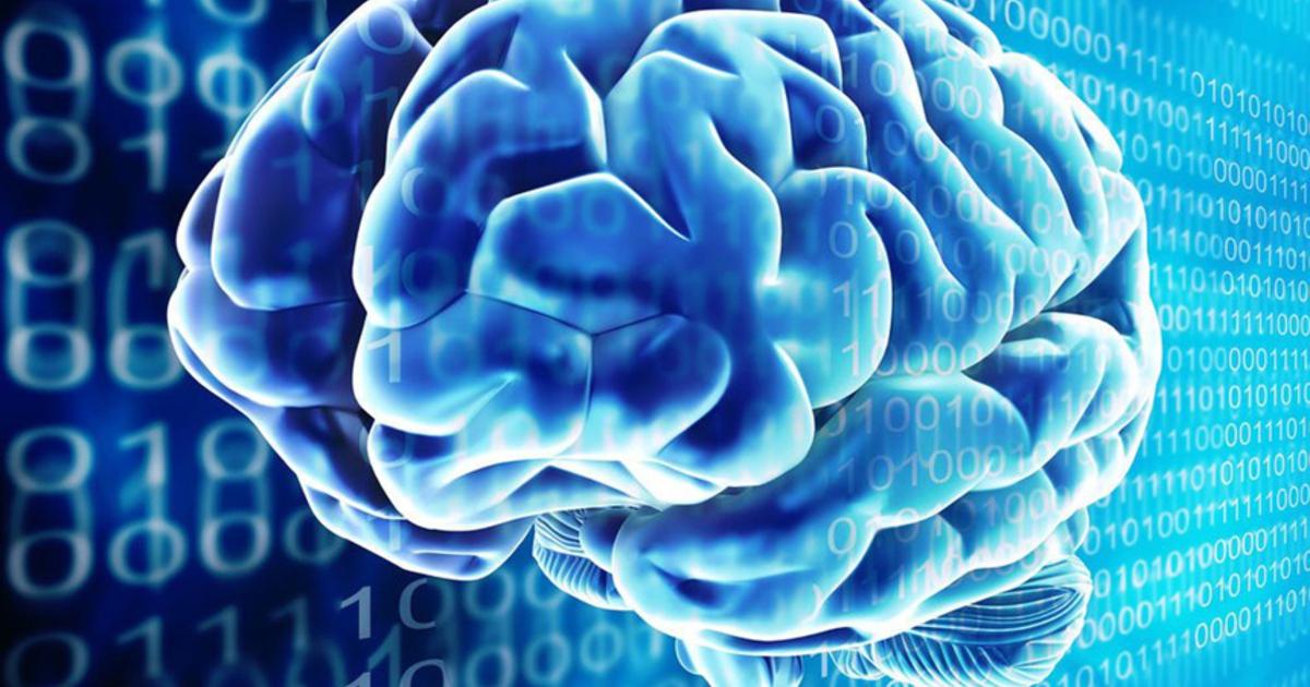 Учёные рассказали, как устроена «оперативная память» в человеческом мозге