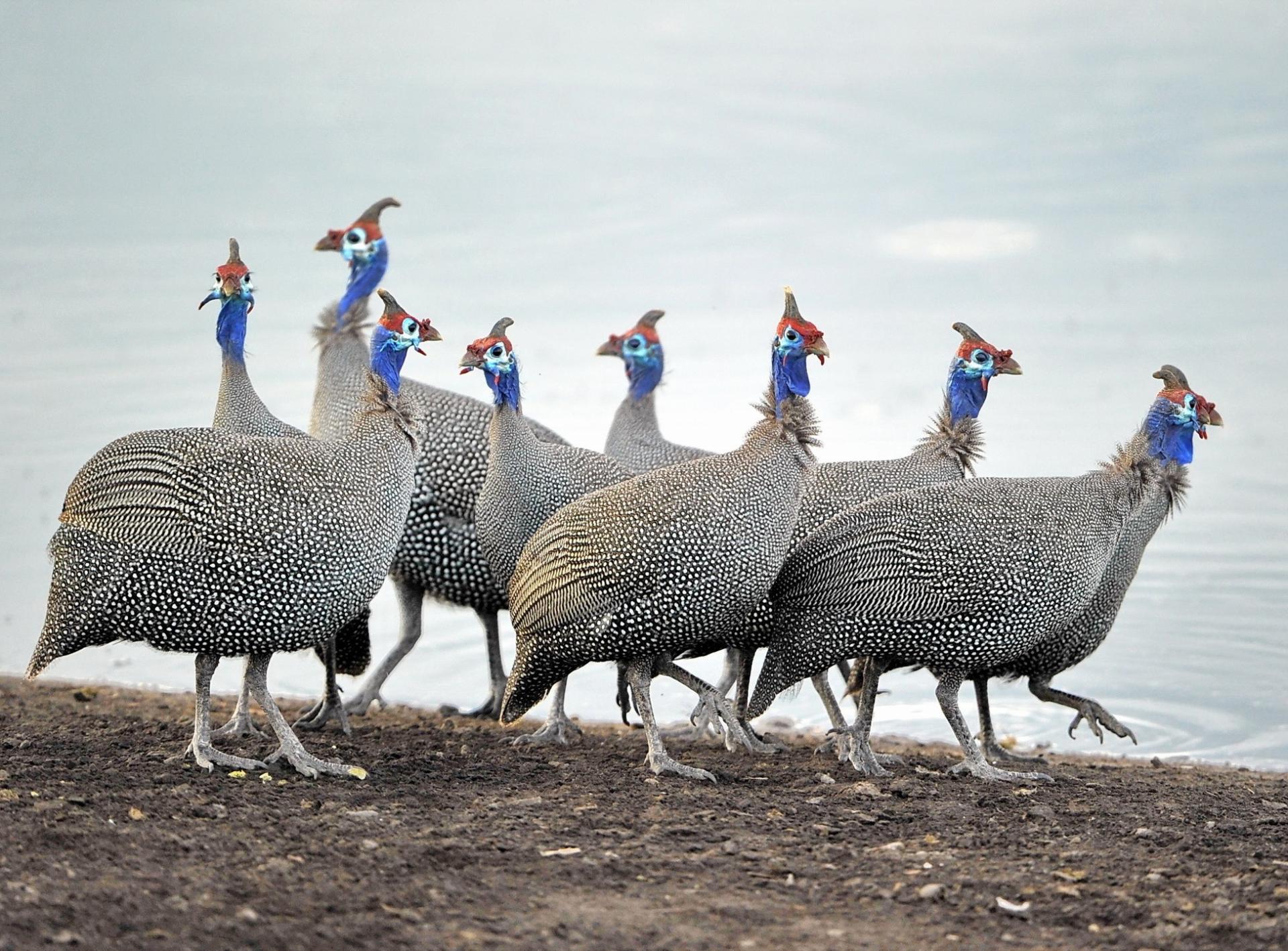 Птицы оказались способны иметь семейные взаимооотношения