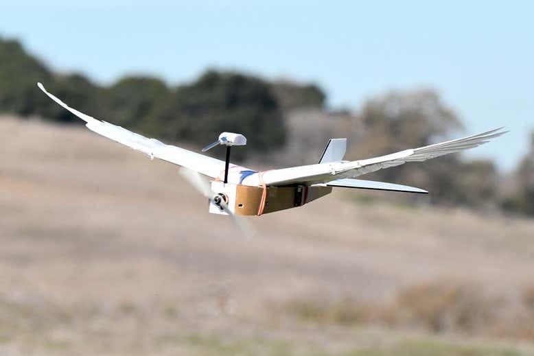 Учёные создали дрон с настоящими птичьими перьями