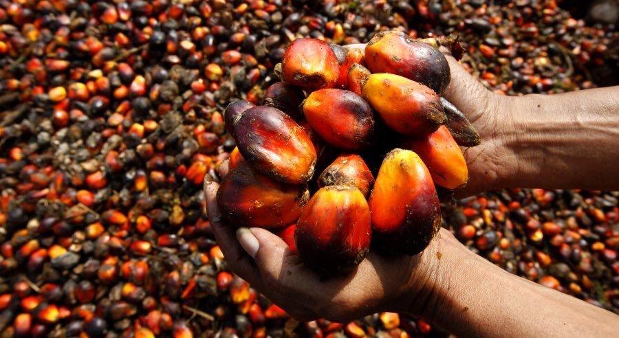 Пальмовое масло оказалось вредным не только для человека, но и для экологии