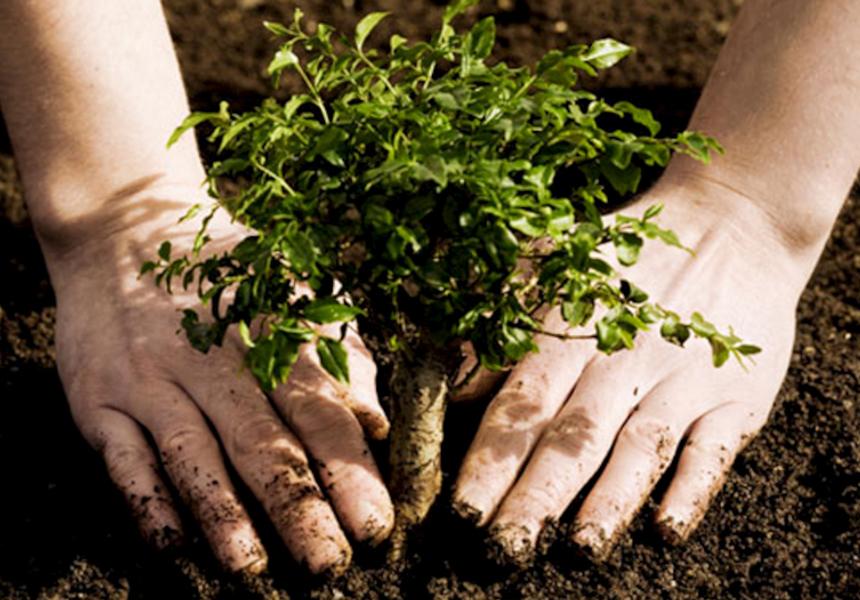 Создана мобильная игра, которая позволяет сажать реальные деревья