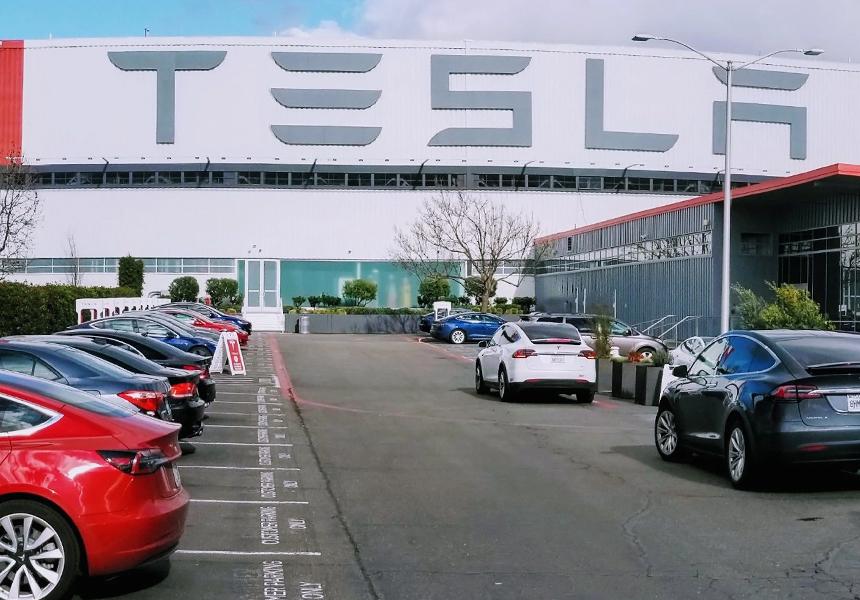 Tesla высадит новые деревья взамен вырубленных для завода в Европе