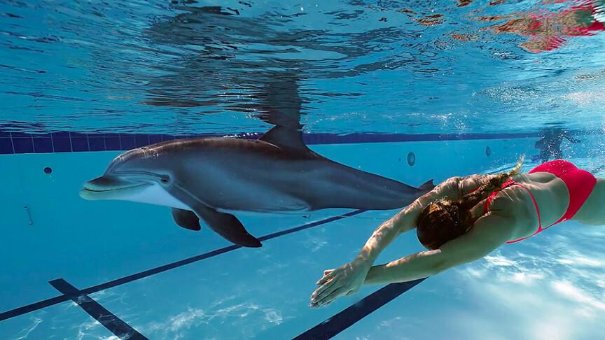 создан робот-дельфин замены настоящих животных парках развлечений