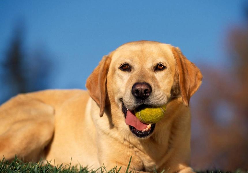 Учёные открыли точный метод пересчёта возраста собак в «человеческие» годы