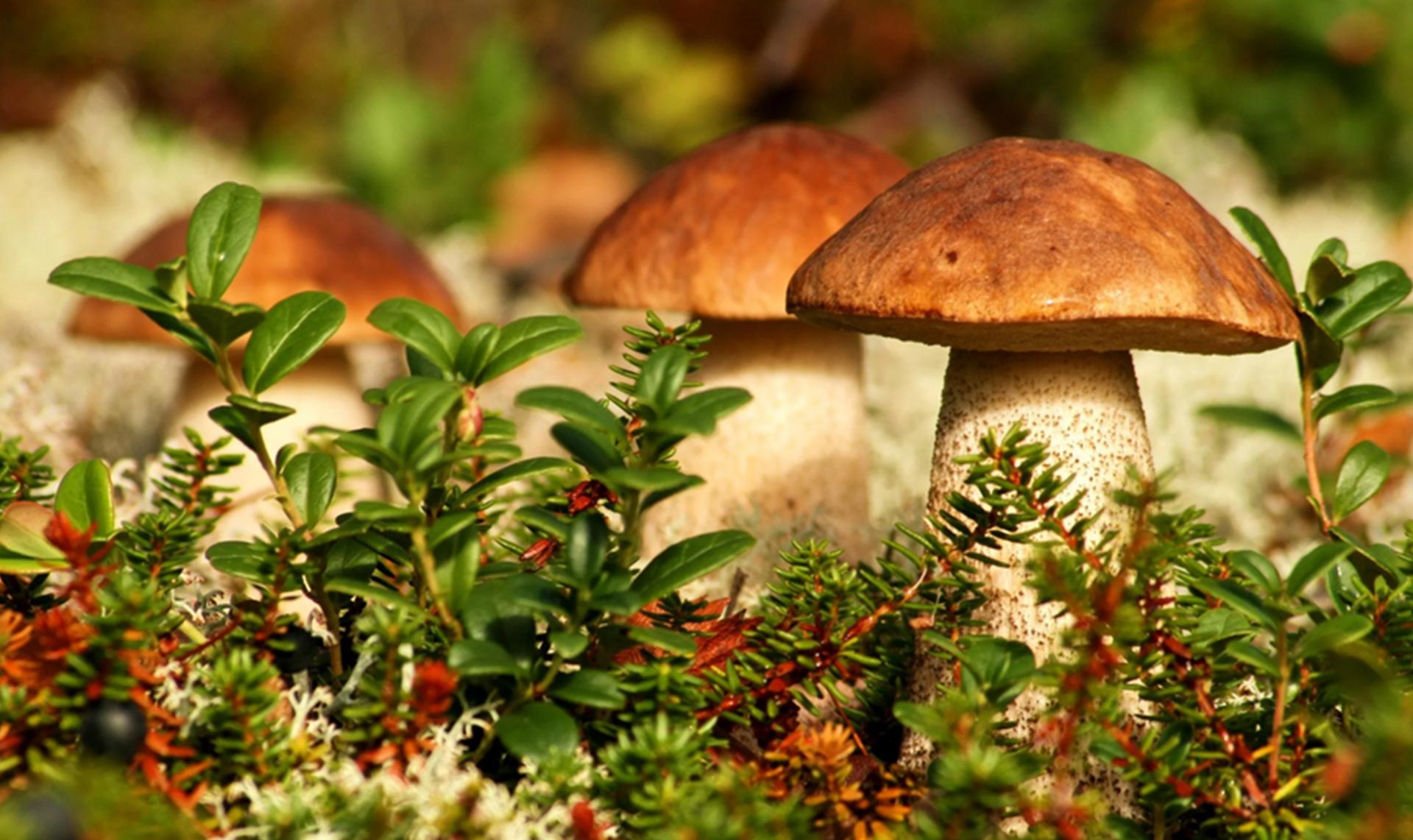 Эксперт рассказал об опасности съедобных грибов