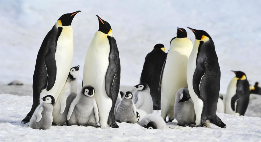 Из-за таяния снега в Антарктиде ученые обнаружили мумии пингвинов