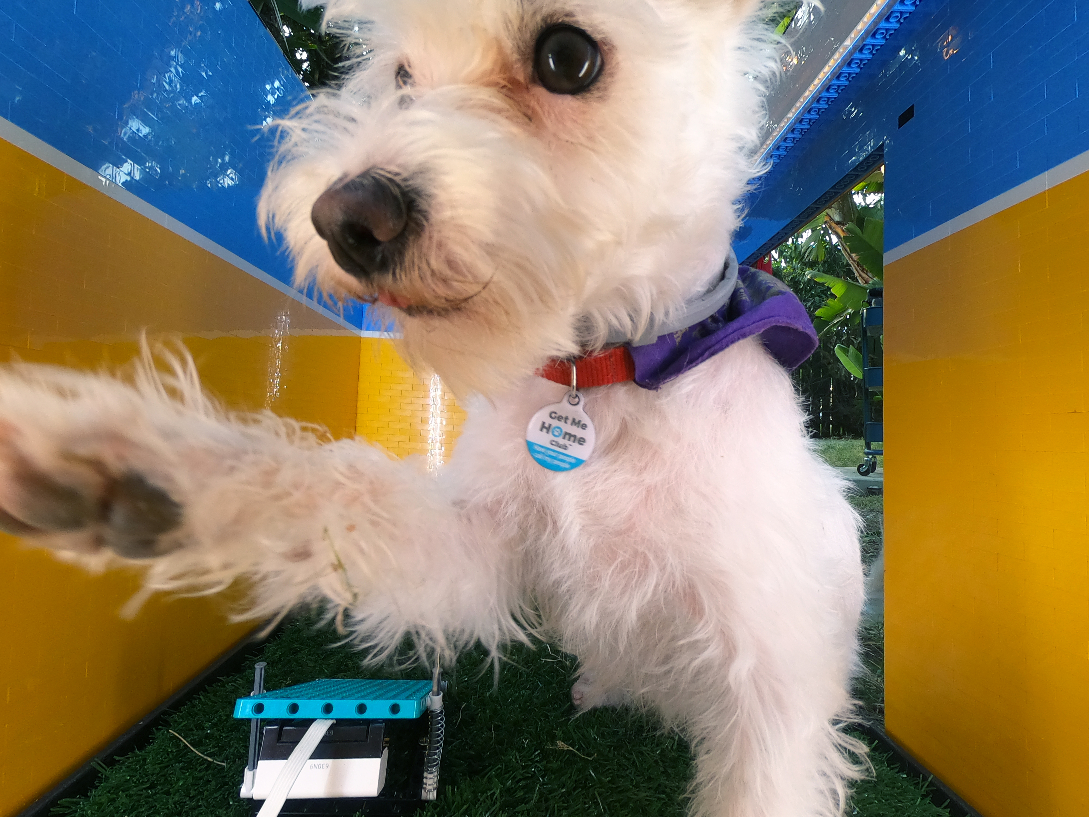 Из Lego сделали фотобудку для собаки