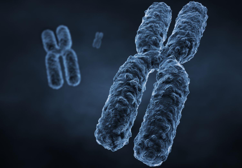 Показано, как по-настоящему выглядят хромосомы