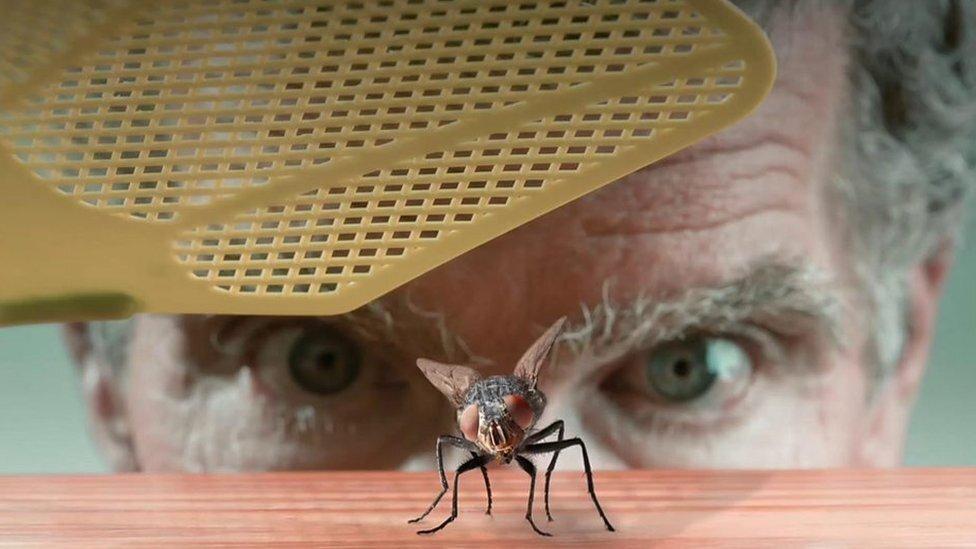 Учёные выяснили, почему мух так сложно поймать