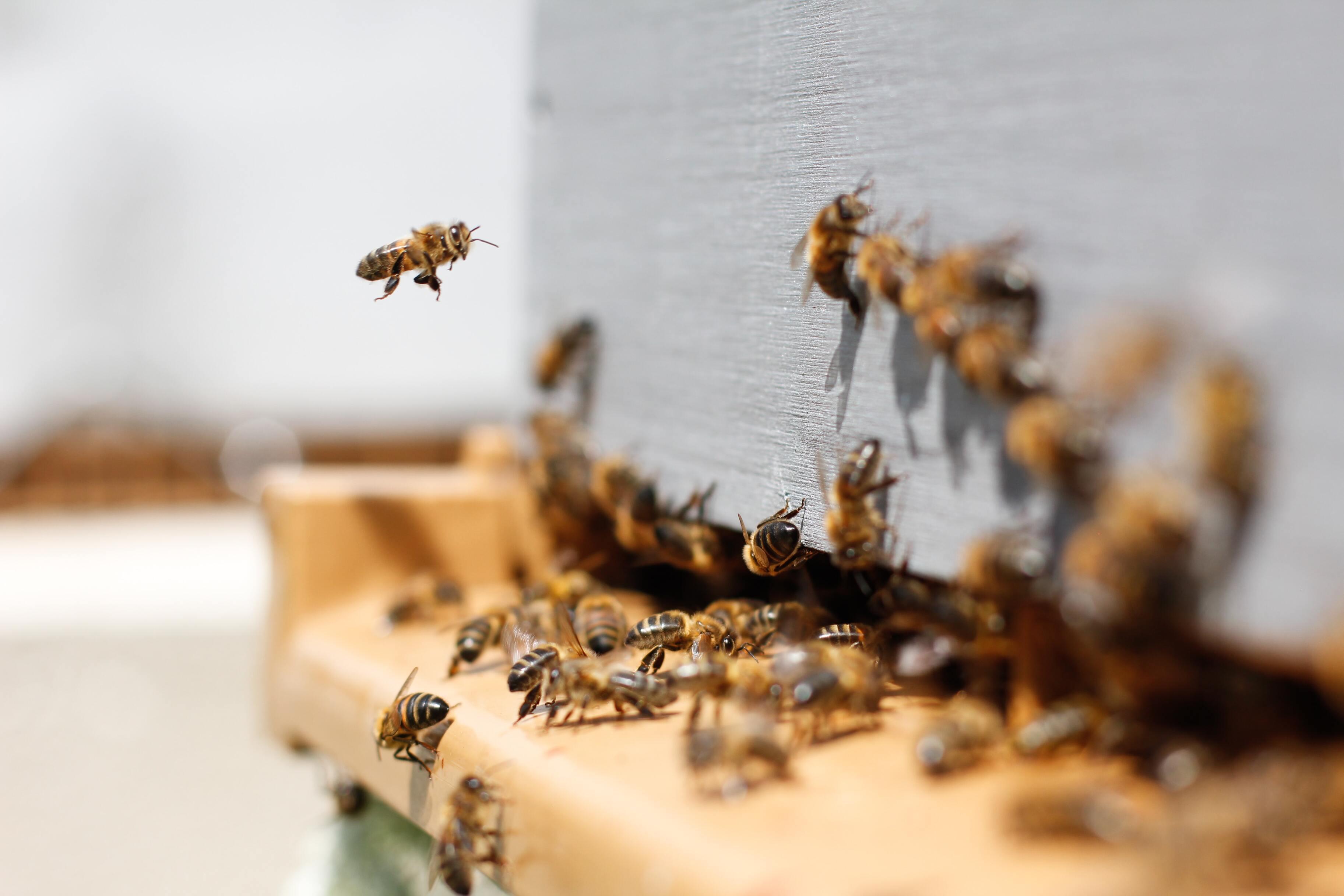 В покинутых из-за карантина офисных зданиях начали селиться пчёлы