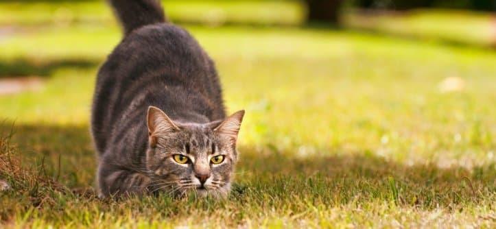 Ученые обнаружили способ уменьшить желание домашних кошек охотиться