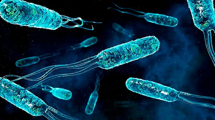 Ученые выяснили, как бактериям удается выжить при лечении антибиотиками