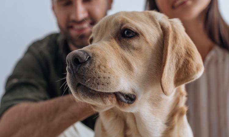 Ученые обнаружили самосознание у собак