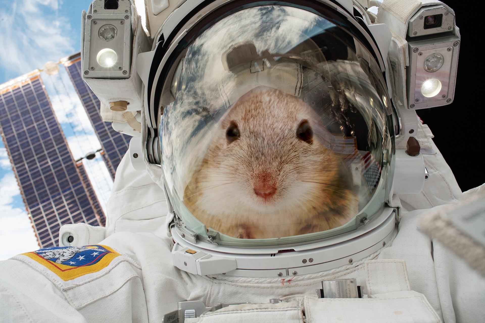 В России создадут спутник для отправки мышей в космос