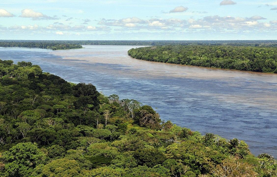 Леса Амазонии начали незаконно продавать через Facebook