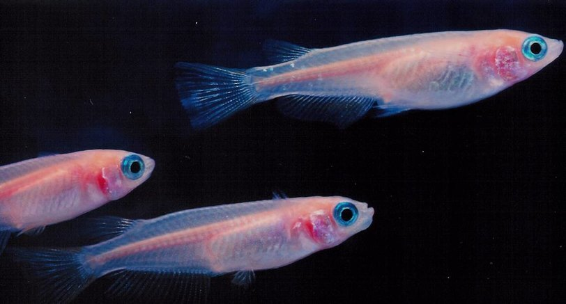Жители Луны смогут выращивать рыбу из земных икринок