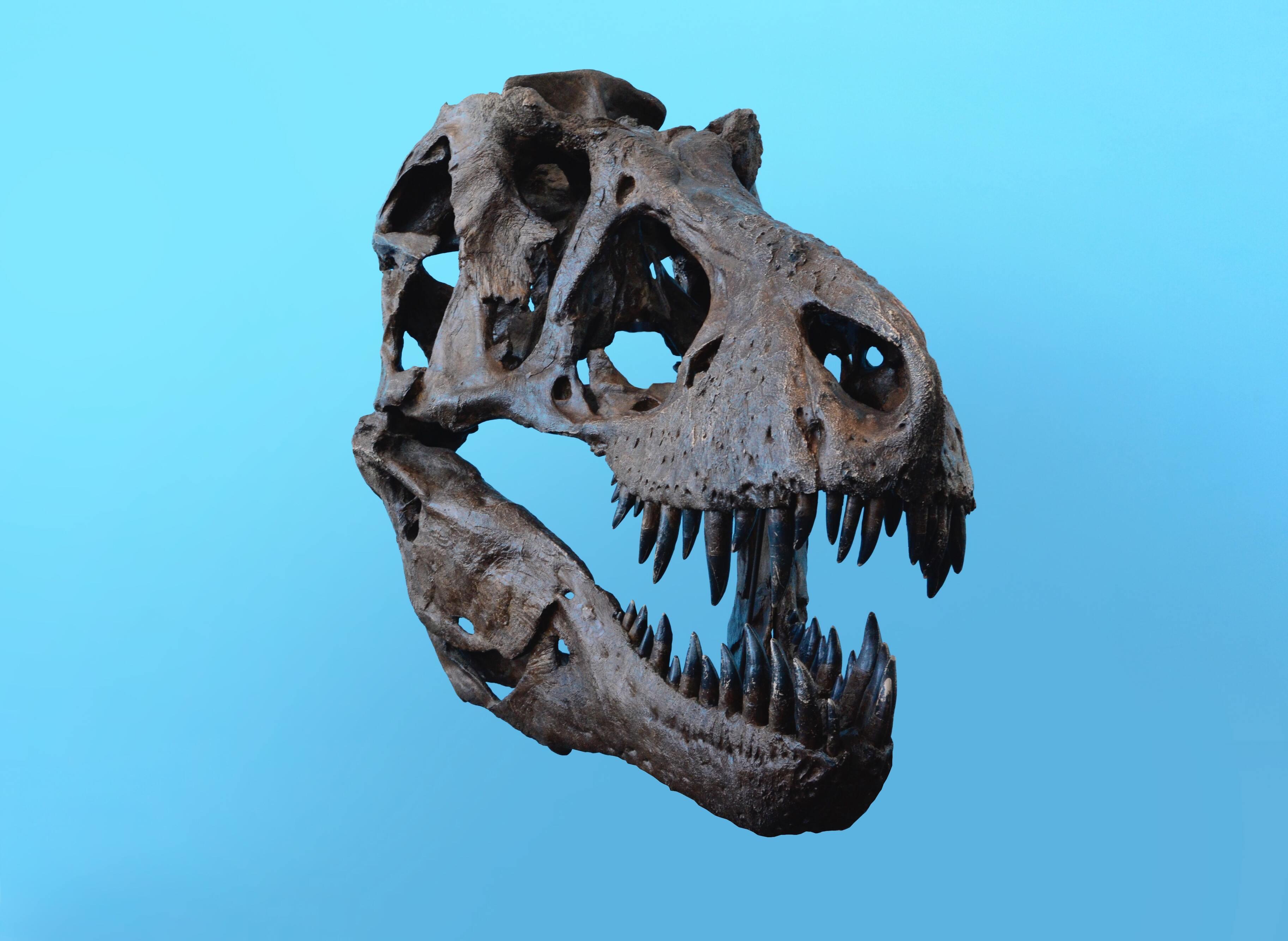 Цифра дня: Сколько всего тираннозавров жило на Земле