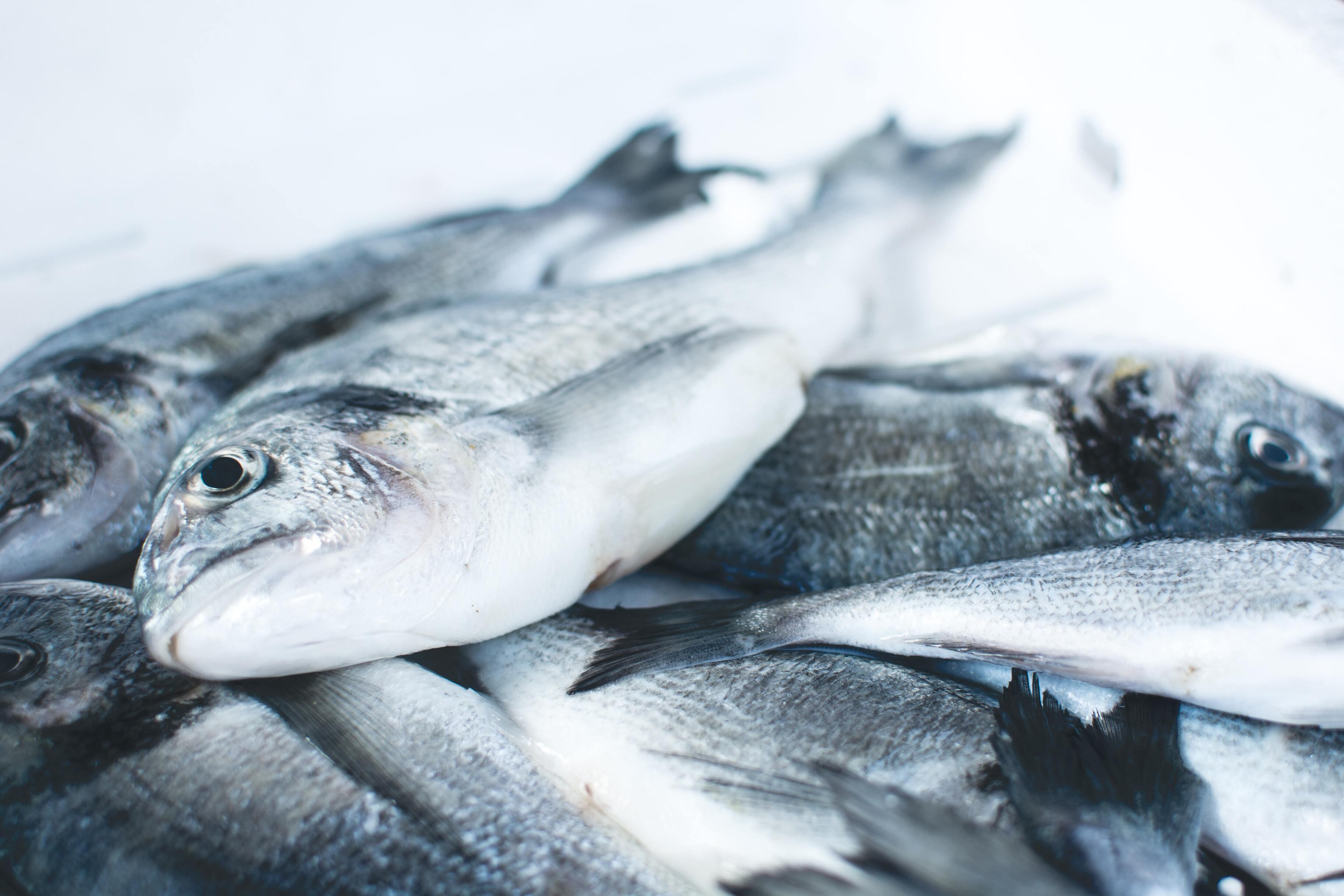Рыбий жир оказался способен продлить жизнь