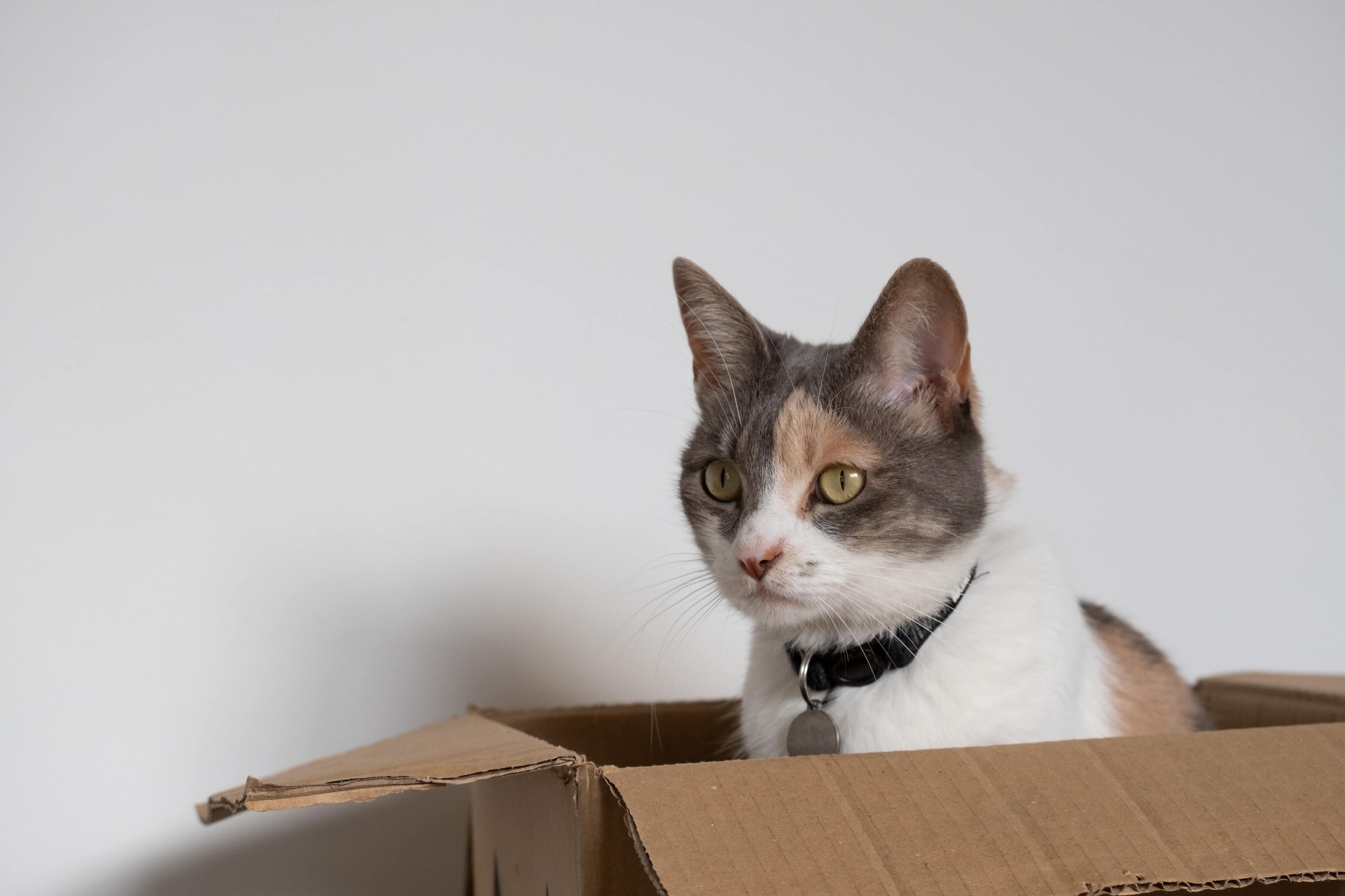 Кошачьи кубиты помогли сделать квантовый компьютер устойчивее к ошибкам