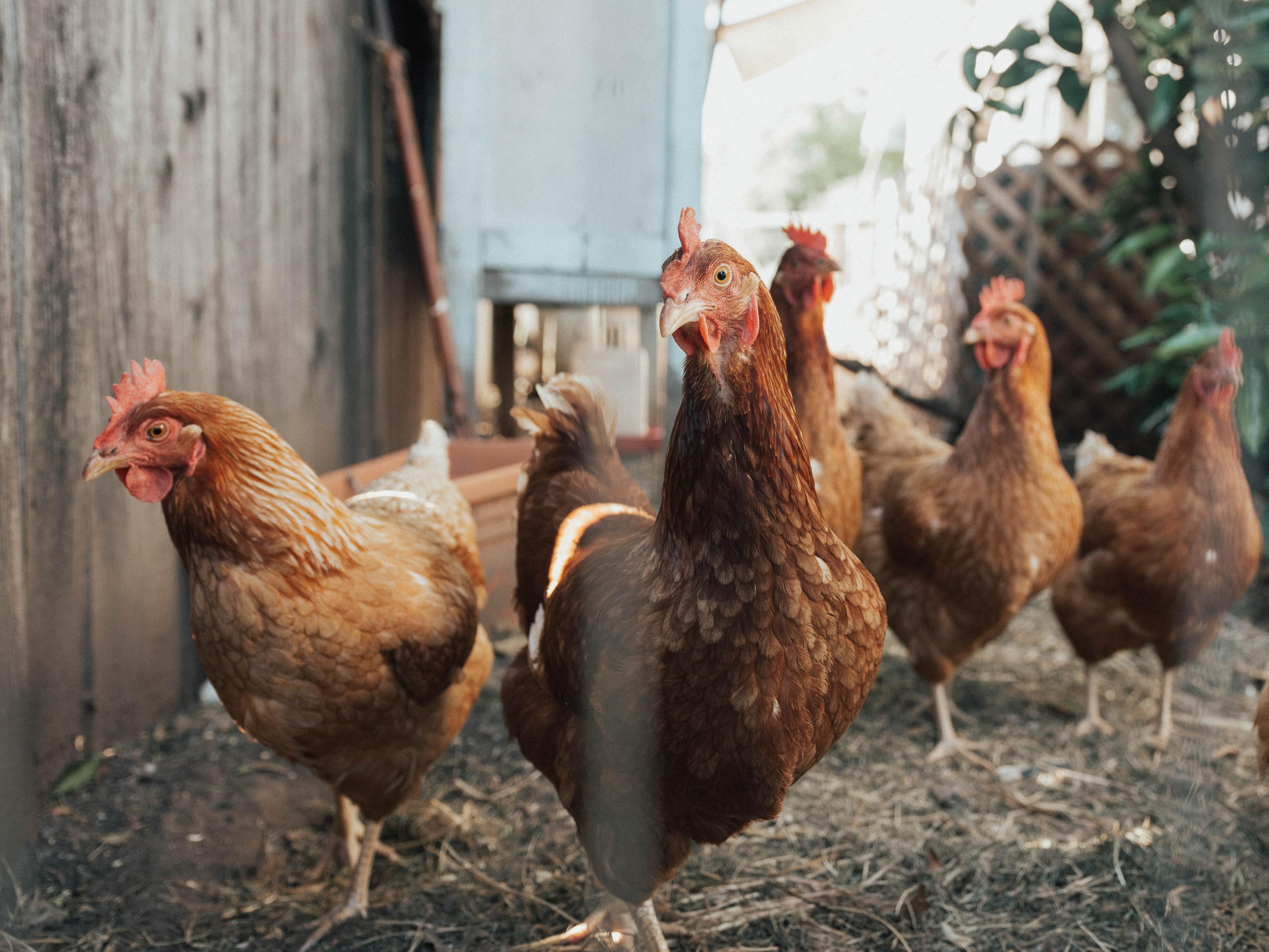 Эксперт оценил вероятность пандемии птичьего гриппа