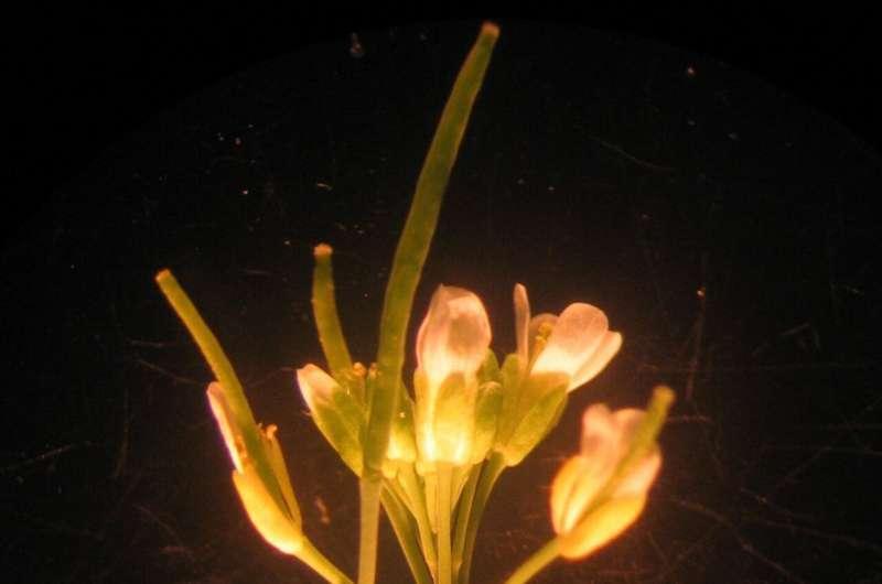 Учёные нашли у растений новый орган