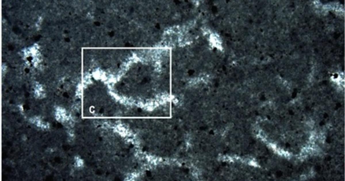 Обнаружен потенциальный след самого древнего многоклеточного