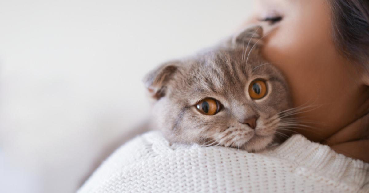 В геномах людей и кошек нашлись сходства
