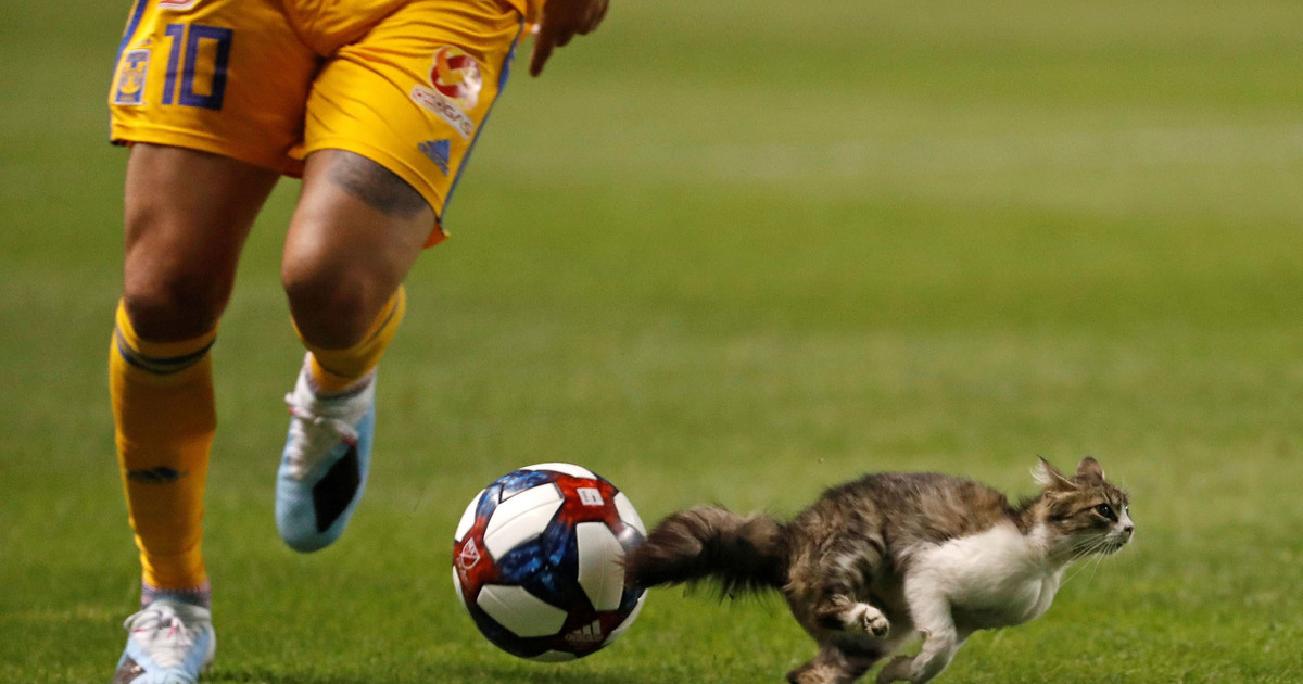 Учёные объяснили, почему четвероногие животные бегают быстрее человека