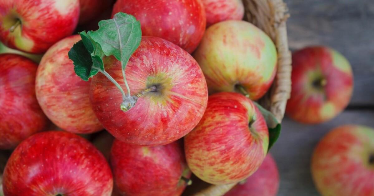 Врач назвала количество яблок, которое можно съесть за день