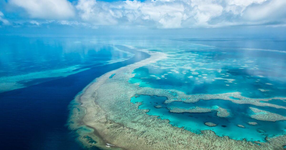 Учёные предупредили о вымирании живых существ на поверхности океанов к 2100 году