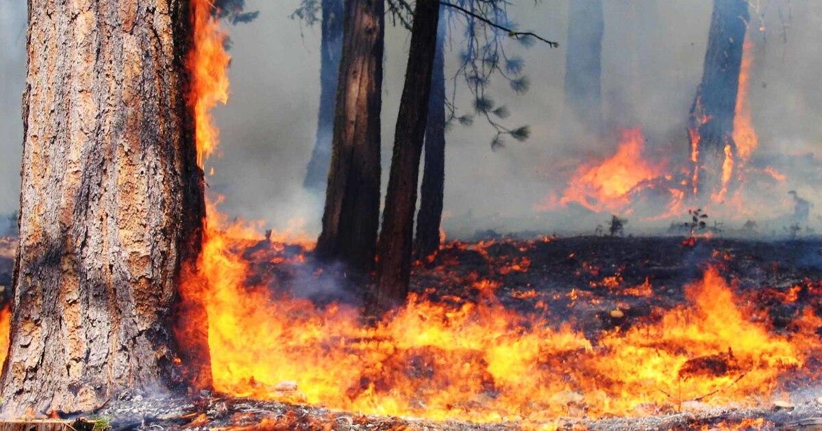 Эксперты предрекли заболевания и смерть горожан из-за микрочастиц после лесных пожаров