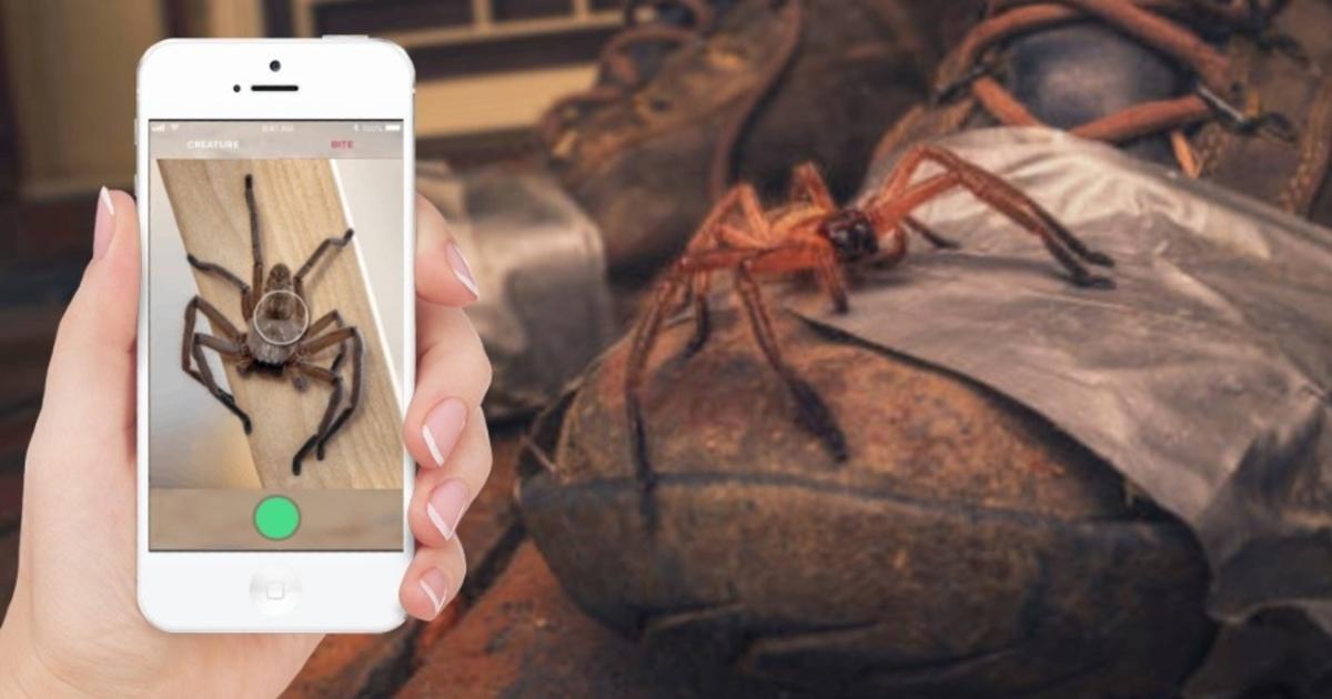 Создано мобильное приложение для лечения боязни пауков